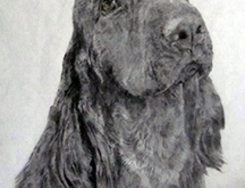 The Field Spaniel – From the Breeders Eye