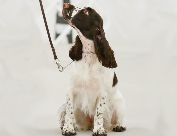 Competing in Obedience