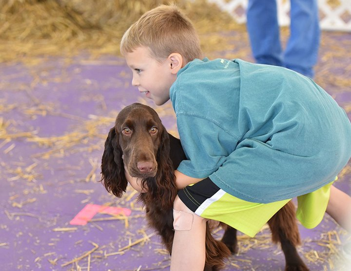 Field Spaniel with her boy at Barn Hunt.