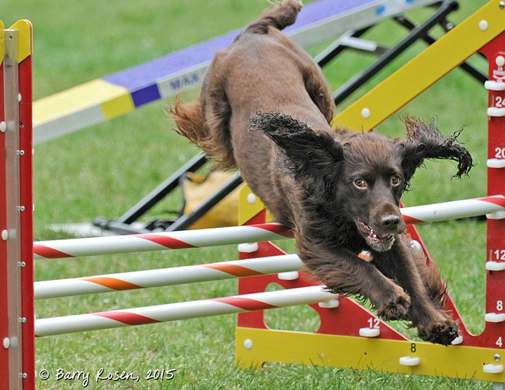 Triple bar Jump in Agility